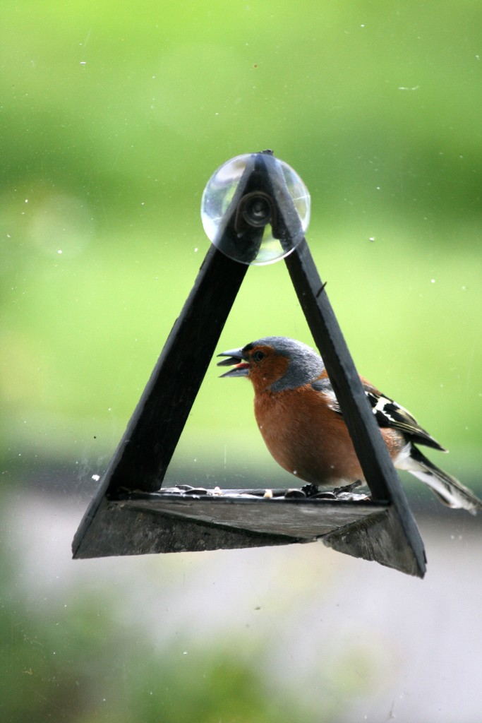 windowfeeder-vink-zijkant