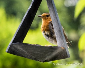 robin-on-windowf-customer-1
