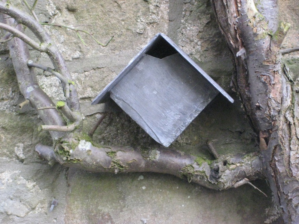 close up wren box