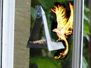 phoenix on wf